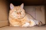 Cremazione animali domestici: a Palermo nasce Infinity Pet