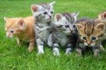 Dottor Bau & Dottor Miao: arriva la mutua per cani e gatti