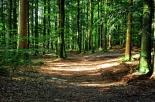 Disperdere le ceneri nei boschi: ad Urbe (SV) si potrà