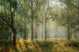 ''Diventare Alberi'': al via il progetto per trasformare le ceneri in alberi