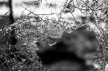 Taglie sui vandali che devastano il cimitero: la scelta del sindaco di Vigonza