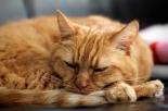 Animali sepolti di fianco al proprio padrone: New York diventa più Pet Friendly