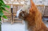La giunta regionale della Liguria da il via libera ai cimiteri per animali