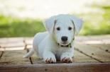 Parco Beato: il luogo perfetto per far riposare il proprio animale domestico
